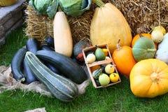 许多不同的菜在前面的庭院里干草 免版税库存图片