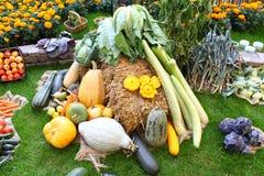 许多不同的菜在干草球的庭院里 免版税库存照片