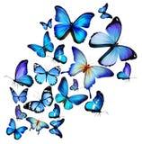 许多不同的蝴蝶 免版税库存照片