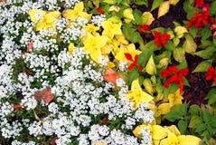 许多五颜六色的花在夏天庭院里增长 免版税图库摄影