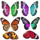 许多五颜六色的蝴蝶翼 免版税图库摄影