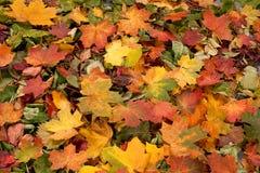 许多划分为的秋叶的一个五颜六色的图象 库存图片