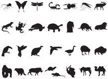 许多动物和昆虫 库存照片
