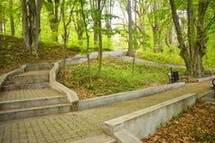 许多台阶在公园绿色公园在一个晴朗的春日 免版税库存图片
