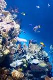 许多各种各样的鱼 库存照片