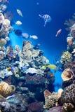 许多各种各样的鱼 免版税库存照片
