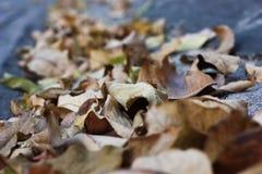 许多在一个灰色黑地板上的绿色棕色叶子 免版税库存照片