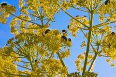 许多在一朵黄色花的臭虫 免版税库存照片