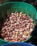 许多在塑料篮子的大蒜 库存图片
