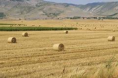 许多在干燥被收获的小牧场舱内甲板的大圆的干草捆 库存照片