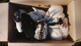 许多在户外纸板箱的小兔子 影视素材