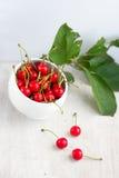 许多在白色杯子和绿色叶子的红色樱桃 免版税库存图片