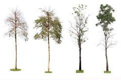 许多在白色背景的热带树。 免版税图库摄影