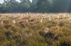 许多在草之间的潮湿蜘蛛网和开花他 免版税库存图片