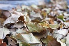 许多在街道地板上的绿色棕色叶子 库存图片
