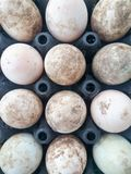 许多在黑蛋盘区的鸡蛋 库存图片