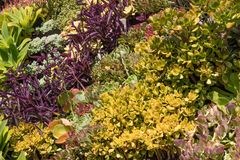 许多多汁植物和热带植物落下的背景在多片树荫下绿色,黄色,红色,桃红色和紫色 库存图片