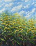 许多大黄色开花油画 库存照片