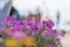 许多完整色彩的花聚焦和弄脏背景 库存图片