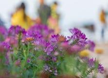 许多完整色彩的花聚焦和弄脏背景 库存照片