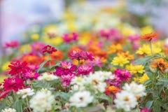 许多完整色彩的花聚焦和弄脏背景 免版税库存图片