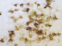 许多小的蜘蛛 免版税库存照片