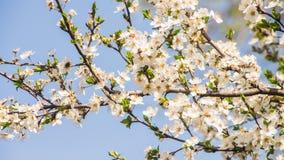 许多小花和芽有绿色叶子的 图库摄影