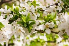 许多小花和芽有绿色叶子的 免版税库存照片