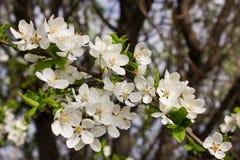 许多小花和芽有绿色叶子的 免版税库存图片