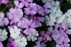 许多小花在庭院里 库存图片