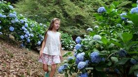 许多开花的八仙花属灌木在公园增长 女孩,孩子,愉快地跑通过蓝色美丽的花  股票录像
