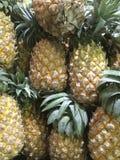 许多成熟菠萝高维生素C,有益于健康 免版税库存图片