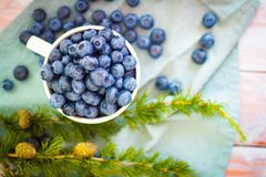 许多新鲜的加拿大蓝莓在一个大白色杯子和驱散其他部分在它附近 免版税库存照片