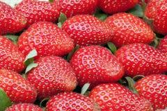 许多新鲜的草莓结果实垂直 库存图片