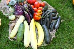 许多新鲜蔬菜在Grasd的一个庭院里 库存图片