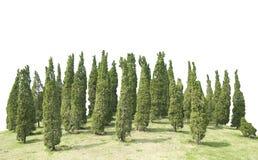 许多杉木园林植物绿色树和草甸被隔绝在文件白色背景与裁减路线的 免版税图库摄影