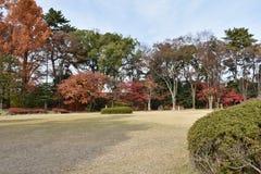 许多树的颜色在公园 免版税库存照片