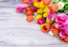 许多桃红色郁金香花束染黄红色和白色和桃红色 库存图片