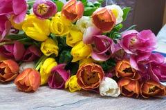 许多桃红色郁金香花束染黄红色和白色和桃红色 库存照片