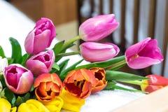许多桃红色郁金香花束染黄红色和白色和桃红色 免版税库存图片