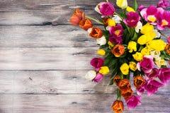 许多桃红色郁金香花束染黄红色和白色和桃红色 免版税库存照片