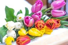 许多桃红色郁金香花束染黄红色和白色和桃红色 免版税图库摄影