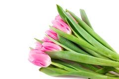 许多桃红色郁金香花束  免版税库存照片