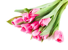 许多桃红色郁金香花束  免版税库存图片