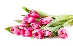 许多桃红色郁金香花束  免版税图库摄影