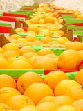 许多桔子 免版税库存图片