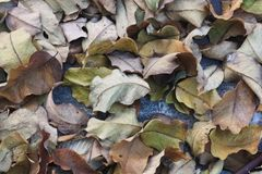 许多棕色绿的叶子顶视图在地板上的 免版税库存图片