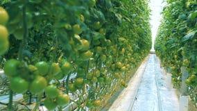 许多植物在农场增长 影视素材