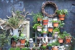 许多植物的庭院装饰罐的 库存图片