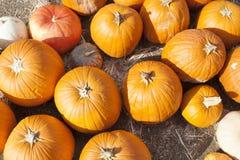许多橙色南瓜和干草在土气秋天Settin 免版税库存图片